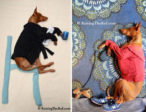 rufus-sleeping-dog-adventures-2.jpg (40.94 Kb)