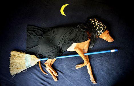 rufus-sleeping-dog-adventures-coverimage.jpg (25.86 Kb)