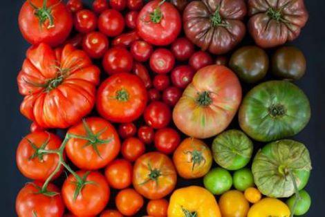 sorta_pomidorov_dlya_salatov_s_opisaniem_i_foto.jpg (31.69 Kb)